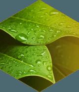 Certified Organic and Natural Waxes | Koster Keunen
